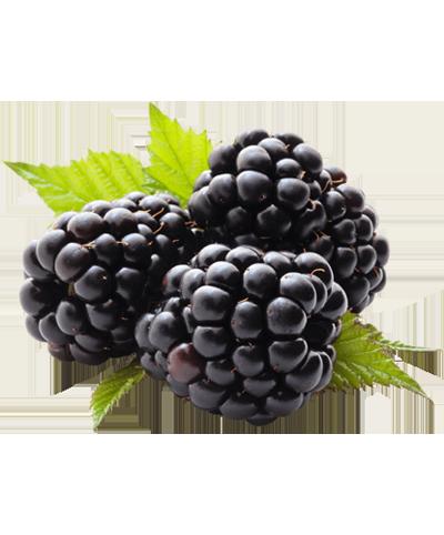 buy blackberry online